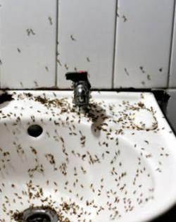 imagen-bano-repleto-moscas-Pekin_TINIMA20120523_0072_18